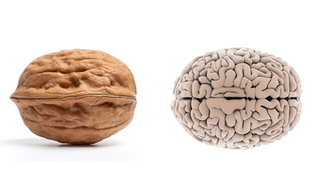 02-Walnut-BrainFoods-That-Look-Like-Body-Parts.jpg